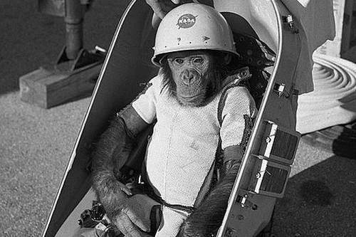 3. Ham, der Astronauten-Schimpanse