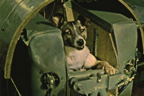 4. Laika, der Hund der in den Weltraum flog