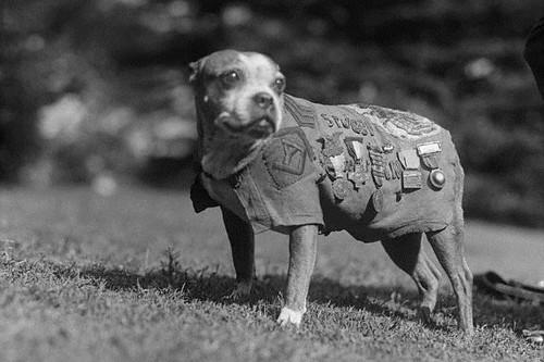 9. Stubby, der Hund der als Sergeant diente