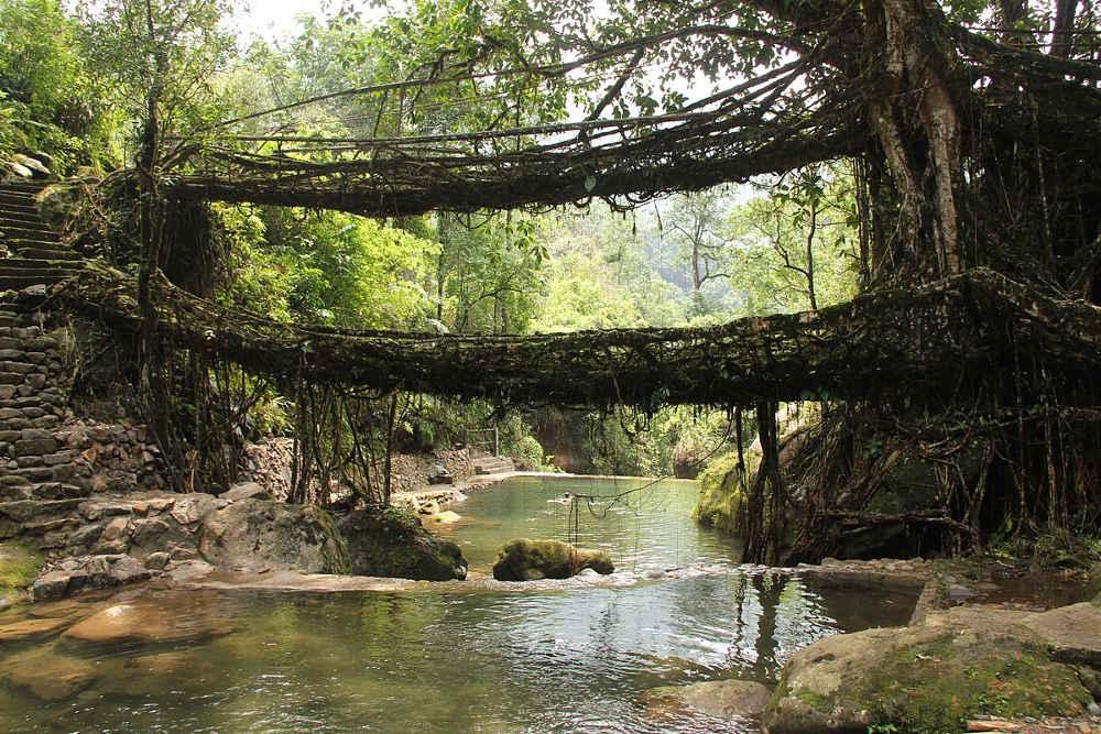 Lebende Brücken Meghalaya