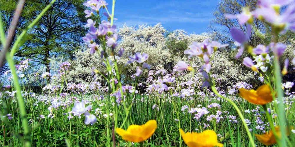 Top 10 Mythen rund um den Frühling
