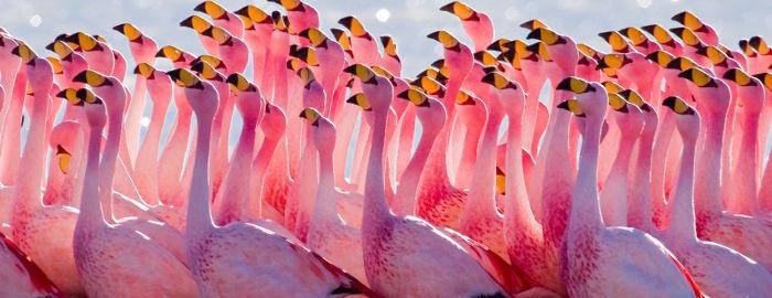 5. Flamingos nicht erwünscht